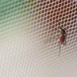Moustiquaire de fenêtre et rideau de porte : une protection simple mais efficace contre les moustiques