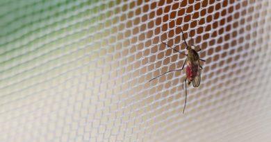 Moustiquaire anti moustique tigre et autres